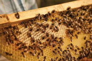 So, You Wanna Be A Beekeeper?
