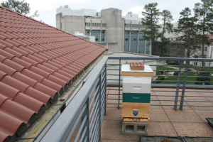 A rectangular box on a roof top. Natural? (Photo by Cindy Hodges)