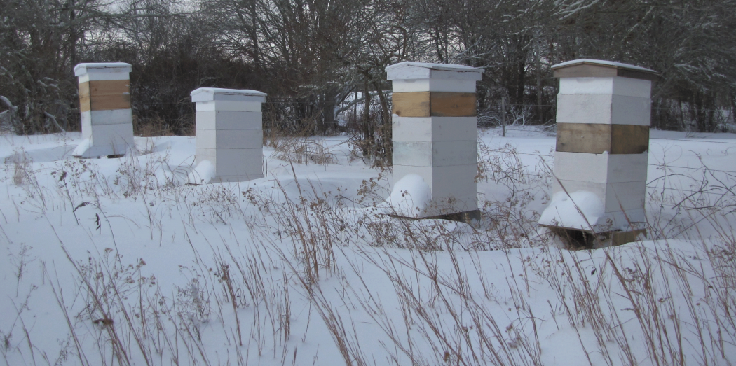 98821237eb442 Winter Management - BEEKeeping: Your First Three Years