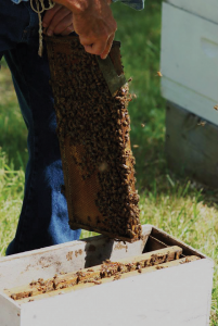 Remove frames with bees, brood and honey from your strong hive.